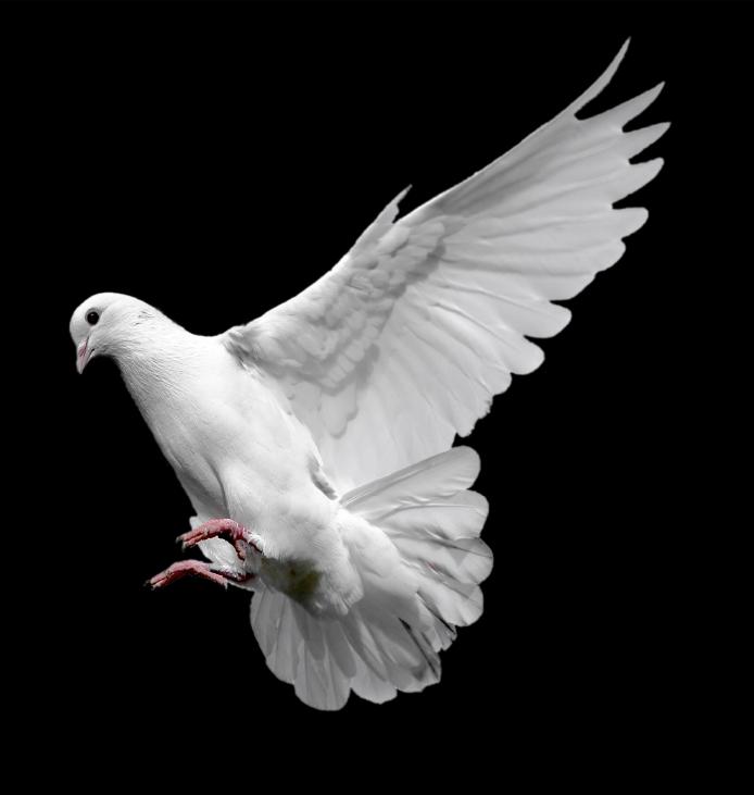 whte-bird